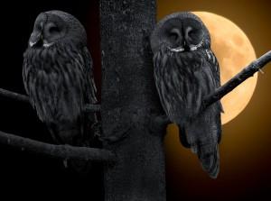 Die Nacht ist dein Freund, du hörst anders
