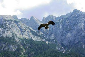 Freiheit, der Adler