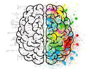 Neue Kompetenzen lernen und das Gehirn