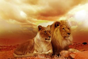 Wecke den Löwen in dir!